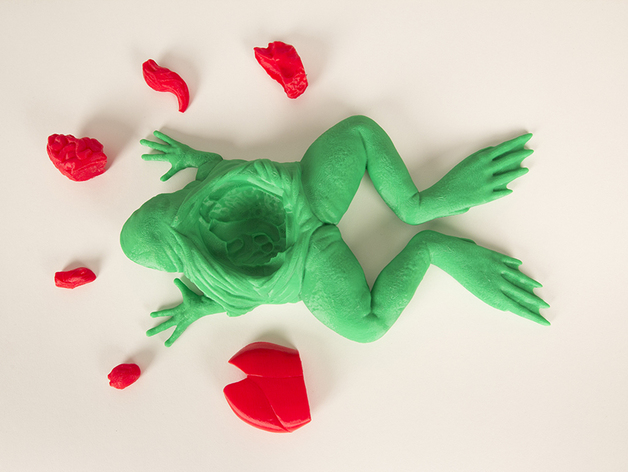 3d printed dissected frog