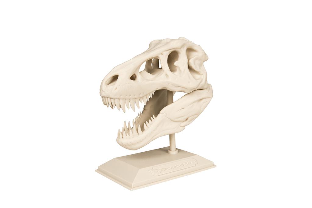Crâne de T-Rex Skull